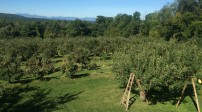 Orchard View (2)