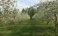 Spring View (2)